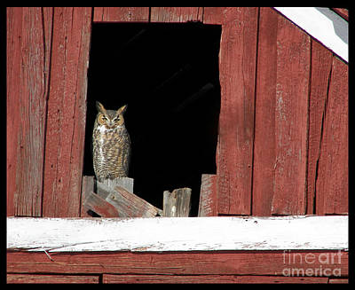 Art Print featuring the photograph Great Horned Owl by Daniel Hebard