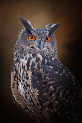 Photograph - Great Horned Owl by David and Carol Kelly