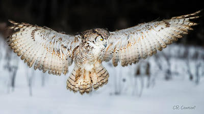 Great Horned Owl Flight Art Print by CR  Courson