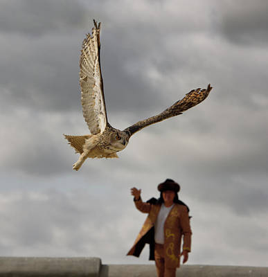 Owl Photograph - Great Horned Owl Free Flying Away From Handler At Khoja Ahmed Ya by Reimar Gaertner