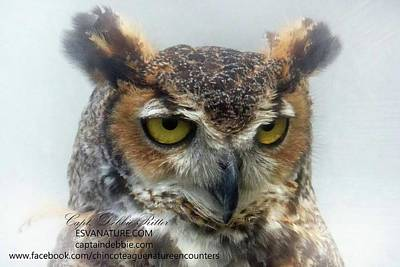 Photograph - Great Horned Owl Head Shot 2 by Captain Debbie Ritter
