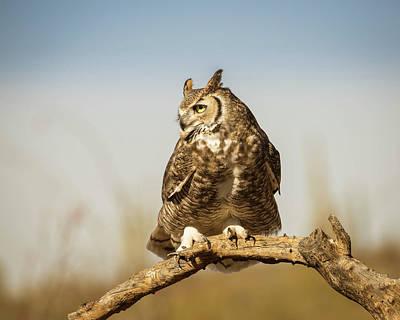 Photograph - Great Horned Owl-img_335718 by Rosemary Woods-Desert Rose Images