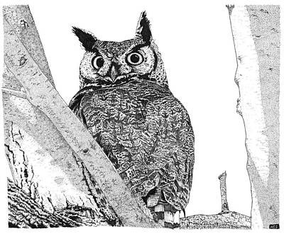Great Horned Owl Drawing - Great Horned Owl In A Tamarisk by Marcus England
