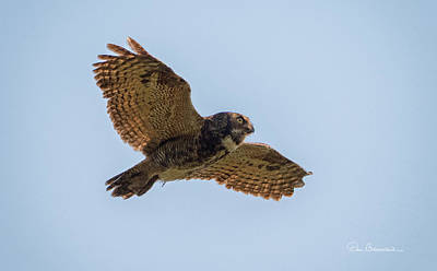 Dan Beauvais Royalty-Free and Rights-Managed Images - Great Horned Owl in Flight 8924 by Dan Beauvais