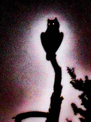 Photograph - Great Horned Owl In The Desert 3 by Judy Kennedy