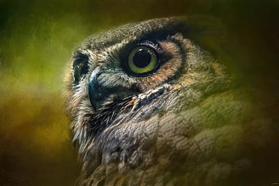 Photograph - Great Horned Owl In The Grove by Jai Johnson