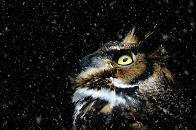 Great Horned Owl In The Snow Art Print by Tracy Munson