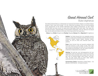 Drawing - Great Horned Owl Infographic by Marcus England