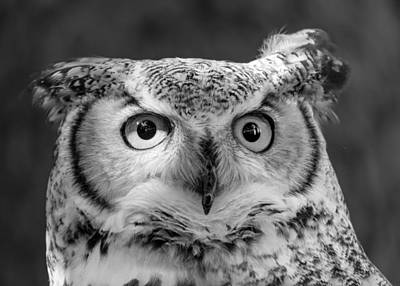 Owl Portrait Photograph - Great Horned Owl by Jim Hughes