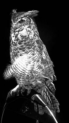 Photograph - Great Horned Owl  by Joyce Wasser
