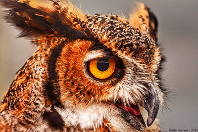 Photograph - Great Horned Owl by Kathi Isserman