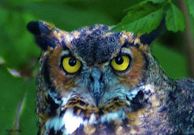 Photograph - Great Horned Owl by Kathy Kelly