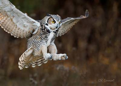 Photograph - Great Horned Owl Landing by CR  Courson