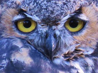 Photograph - Great Horned Owl Macro by Michele Penner