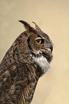 Photograph - Great Horned Owl by Michael Gordon