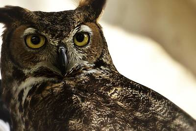 Photograph - Great Horned Owl by Nadalyn Larsen
