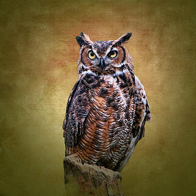 Photograph - Great Horned Owl No 2 by Phyllis Taylor