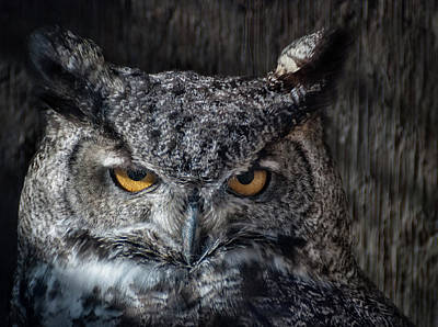 Photograph - Great Horned Owl by Rick Mosher