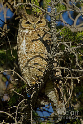 Photograph - Great Horned Owl-signed-#45443 by J L Woody Wooden