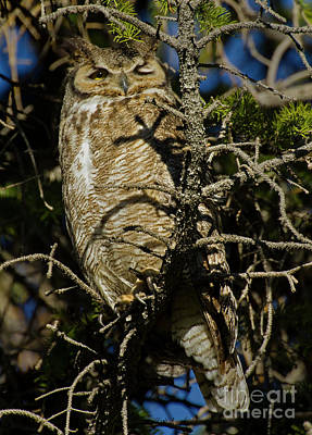 Photograph - Great Horned Owl-signed-#4574 by J L Woody Wooden