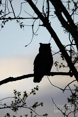 Photograph - Great Horned Owl Silhouette by Alyce Taylor