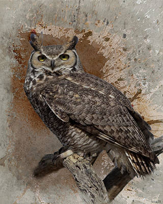 Photograph - Great Horned Owl by Teresa Wilson