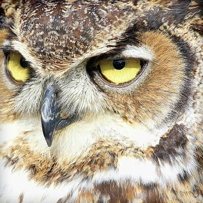 Photograph - Great Horned Owl Up Close by Steve McKinzie