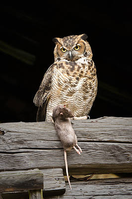 Photograph - Great Horned Owl With Dinner by Tyson and Kathy Smith