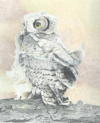 Great Horned Owl Drawing - Great Horned Owlet by Adrienne Deines