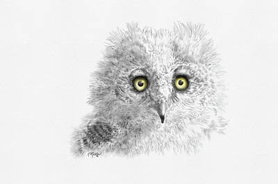 Digital Art - Great Horned Owlet by Kathie Miller
