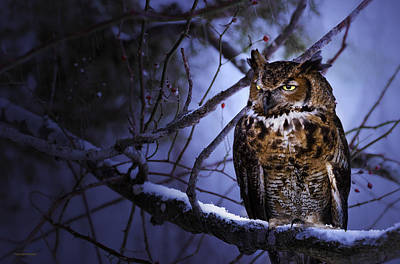 Great Horned Print by Ron Jones