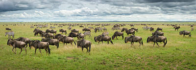 Great Migration In Serengeti Plains Art Print