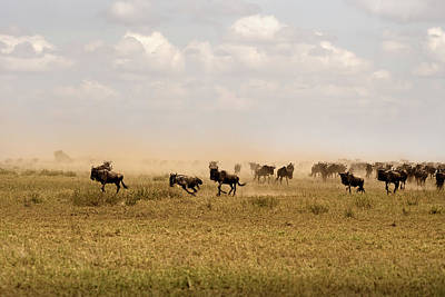 Photograph - Great Migration by RicardMN Photography