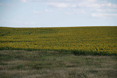 Green Beans Mixed Media - Great Plains Farming Sun Flower Field 10 by Thomas Woolworth