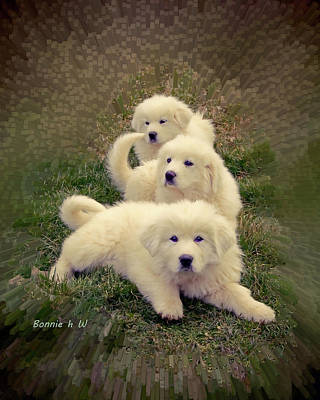 Digital Art - Great Pyranese Triplets by Bonnie Willis