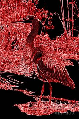 Photograph - Great Red Heron by Frank Townsley