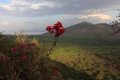 Photograph - Great Rift Valley Flower by Aidan Moran