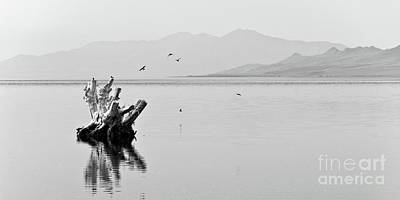 Driftwood Photograph - Great Salt Lake by Delphimages Photo Creations