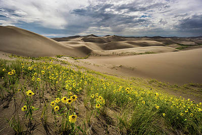 Photograph - Great Sand Dunes Colorado 4 by Whit Richardson
