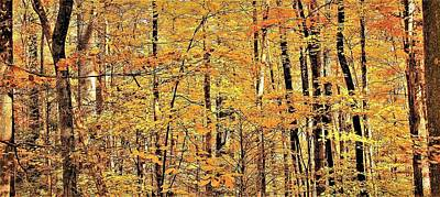 Photograph - Great Smoky Gold by Joshua Bales