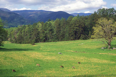 Photograph - Great Smoky Mountains Deer Grazing In Field by John Burk