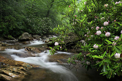 Photograph - Great Smoky Mountains Rosebay Rhododendron by Mark VanDyke