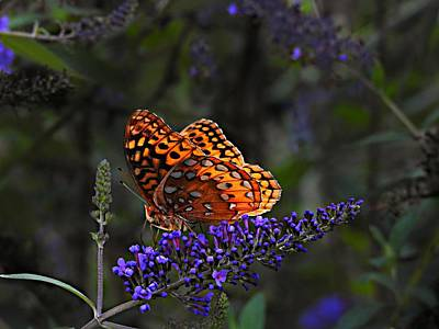 Photograph - Great Spangled Fritillary Butterfly by William Tanneberger