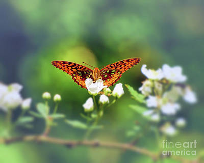 Photograph - Great Spangled Fritillary Looking At Me by Kerri Farley