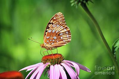 Photograph - Great Spangled Fritillary On Coneflower by Karen Adams