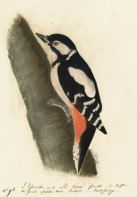Great Spotted Woodpecker Print by John James Audubon
