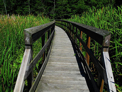 Photograph - Great Swamp Boardwalk by Raymond Salani III