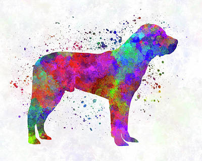 Great Swiss Mountain Dog In Watercolor Art Print