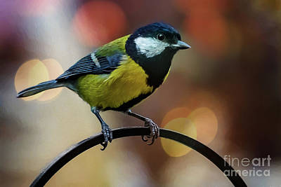 Photograph - Great Tit by Adrian Evans