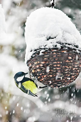 Photograph - Great Tit In The Snow  by Terri Waters